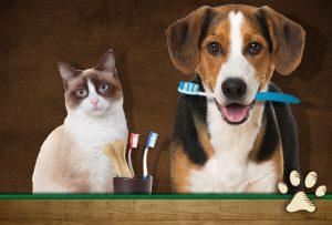 cat and dog dental health